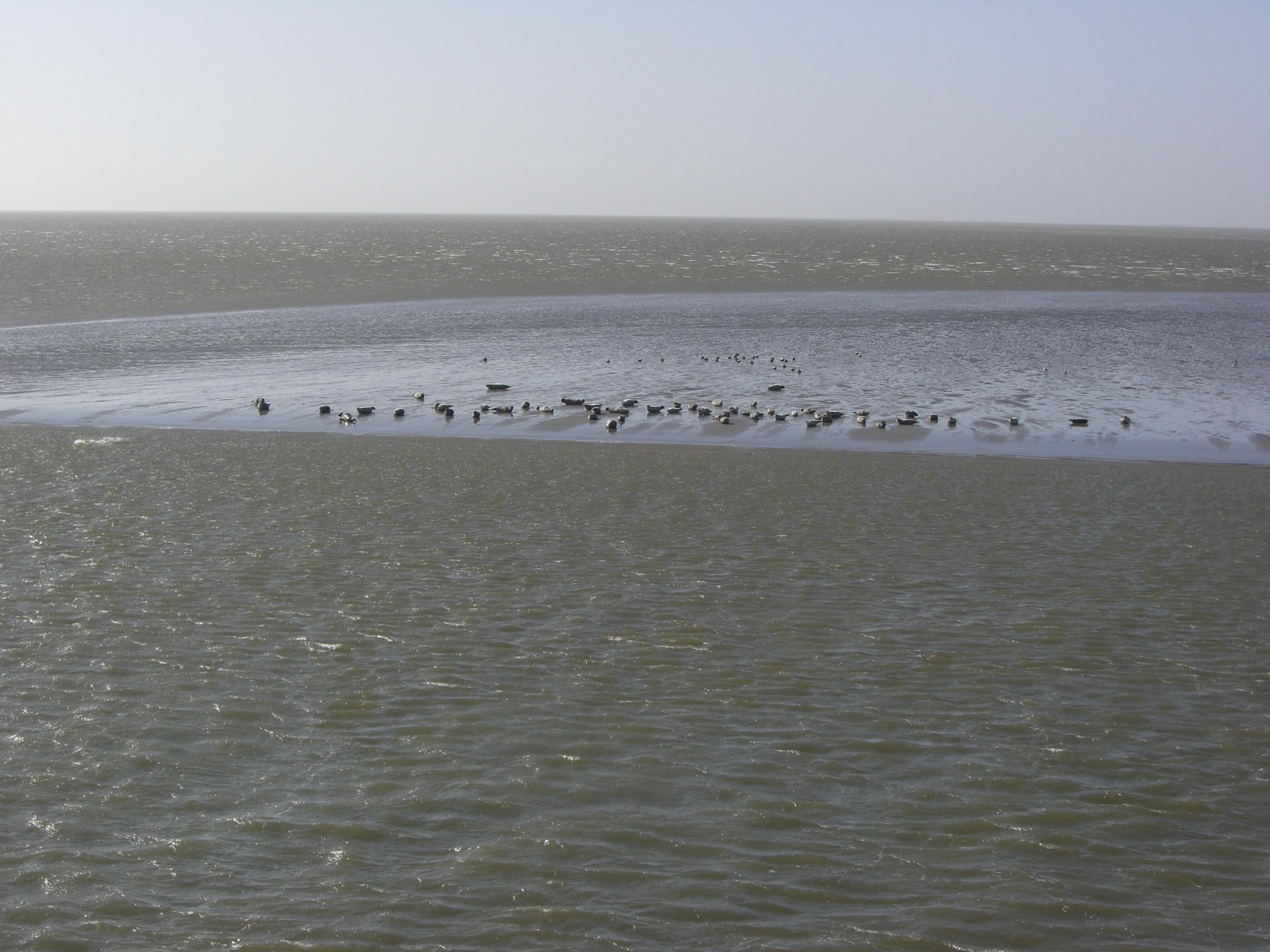 Urlaubs - Residenz Norderney Sonne, Strand und Mee(h)r Buchung unter ...